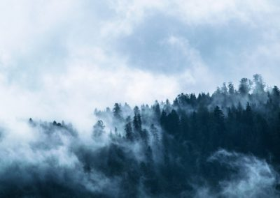 brume forêt